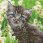 50455-Kitten (1)